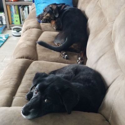 Couch-Potatoes.jpg